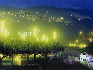 世羅大豊農園-7