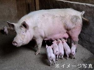 恵那市×養豚/法人【33859】-top