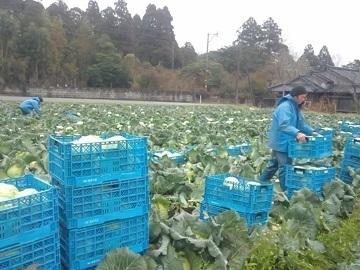 志布志市×野菜/法人【1259】-top