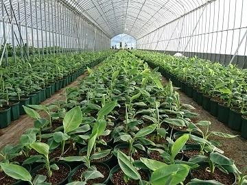 農業法人 株式会社D&Tファーム-2