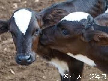 山本郡×酪農/法人【33948】-top