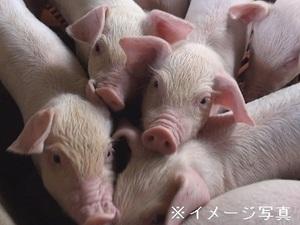前橋市×養豚/法人【33974】-top