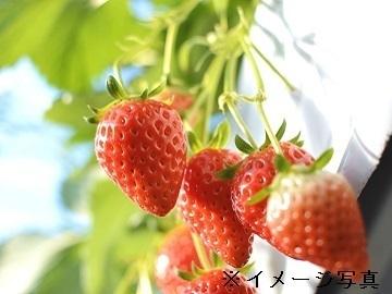 雲仙市×施設野菜/個人【33986】-top