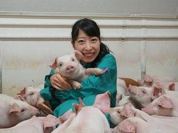 養豚×群馬県・宮崎県/法人【33996】-3