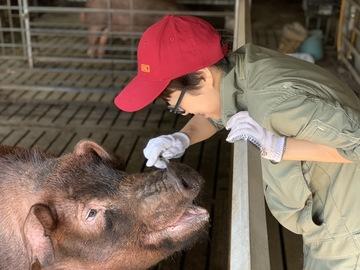 有限会社宮城種豚センター-4