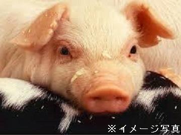 北上市×養豚/法人【34081】-top