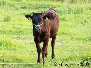 浦幌町×酪農/法人【34092】-top