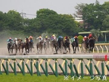 金沢市×馬/個人【34093】-2