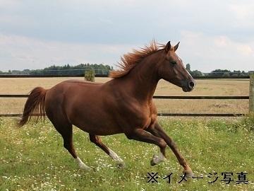 金沢市×馬/個人【34093】-top