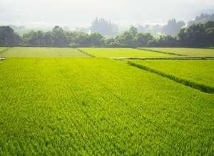 農業の支援情報の写真