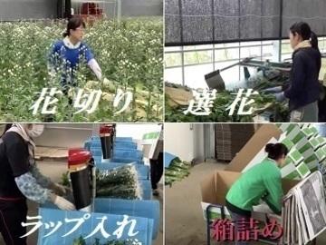 豊後大野市×花・観葉/法人【34111】-7