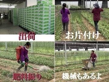 豊後大野市×花・観葉/法人【34111】-8