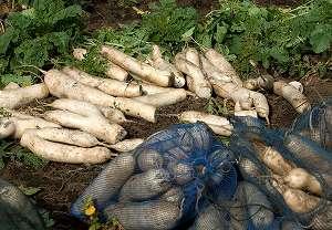 日本の重要な産業を国がバックアップ!農業の補助金制度について