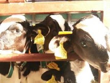 有限会社士幌北肉用牛牧場