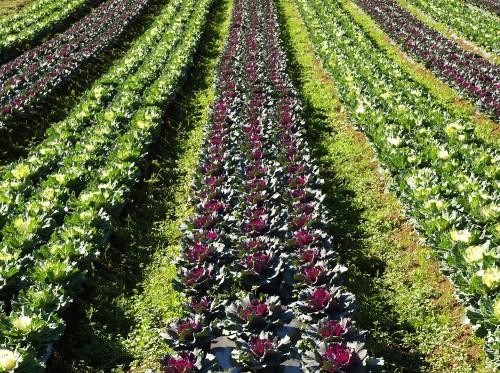 農業起業家とIT戦略