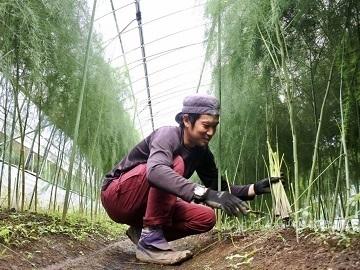 株式会社長谷川農場(農園部門)-top