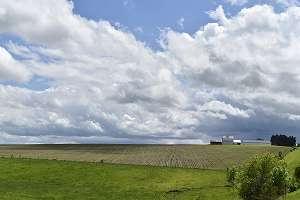 海外の農業情報の写真