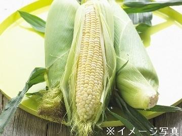 株式会社大坪農園-4