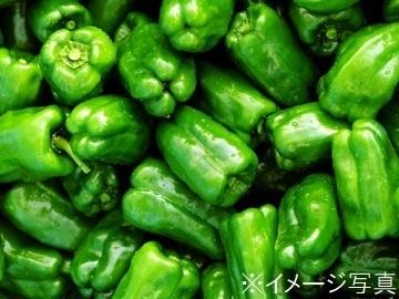 南国市×野菜/法人【34134】-top