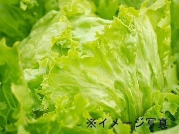 北海道・群馬県×野菜/法人【34265】-1