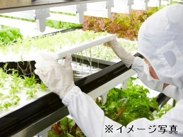 神栖市×植物工場/法人【34275】-top