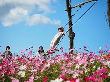 花の駅せら (世羅ゆり園)-1