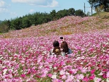 花の駅せら (世羅ゆり園)-2