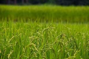 脱サラでの農業経営の写真