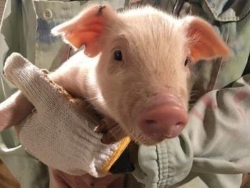 えびの市×養豚/法人【34329】-top