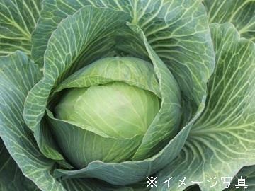 富士見町×露地野菜/個人【34339】-1
