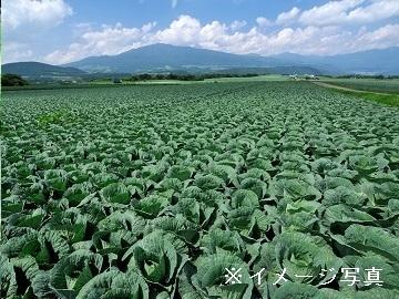 富士見町×露地野菜/個人【34339】-top