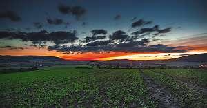 これからの農業はどうなる?担い手の現状と課題