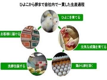埼玉県・茨城県×養鶏/法人【6825】-1