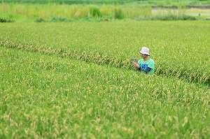 新規参入者なら押さえておきたい!農業で独立開業して稼ぐことは可能か?