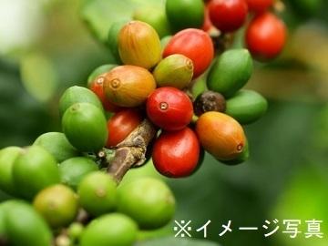 山県市×施設野菜/法人【34379】-top