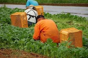 農業法人設立を検討するときに