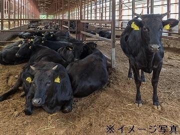 行方市×肉牛/個人【3941】-1