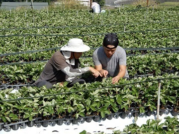 福岡県むなかた地域新規就農研修生募集