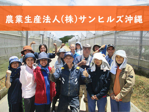 農業生産法人 株式会社サンヒルズ沖縄-top