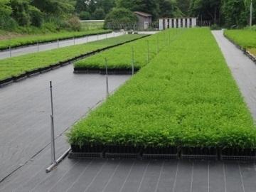 有限会社田村山林緑化農園-4