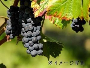 北海道更別村×果樹/法人【34474】-top