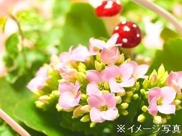 埼玉県鴻巣市×花/法人【34493】-1