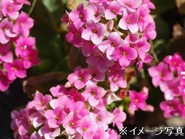 埼玉県鴻巣市×花/法人【34493】-2