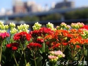 埼玉県鴻巣市×花/法人【34493】-top