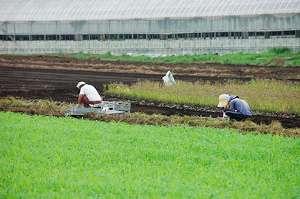新規就農者を取り巻く環境と支援体制について