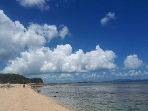 イリオモテ島トミマサの畑-top