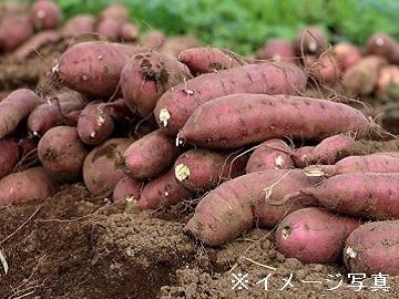 茨城県鉾田市×野菜/個人【34510】-top