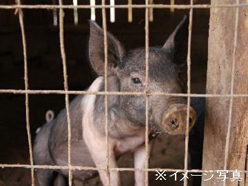 茨城県鉾田市×養豚/法人【34508】-2