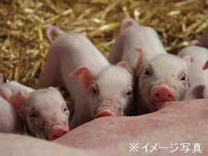 茨城県鉾田市×養豚/法人【34508】-top
