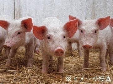 中国地方×養豚/法人【34517】-top